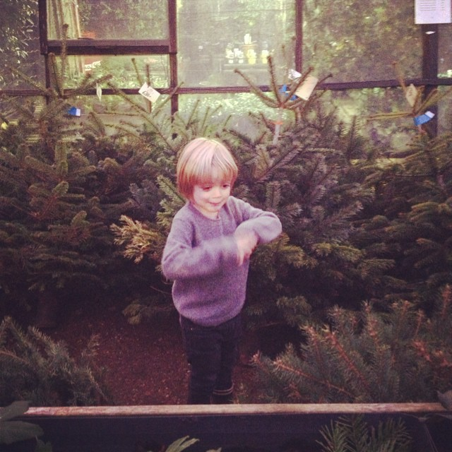 Hide & Seek in the Christmas trees @petershamnurseries #littlespree