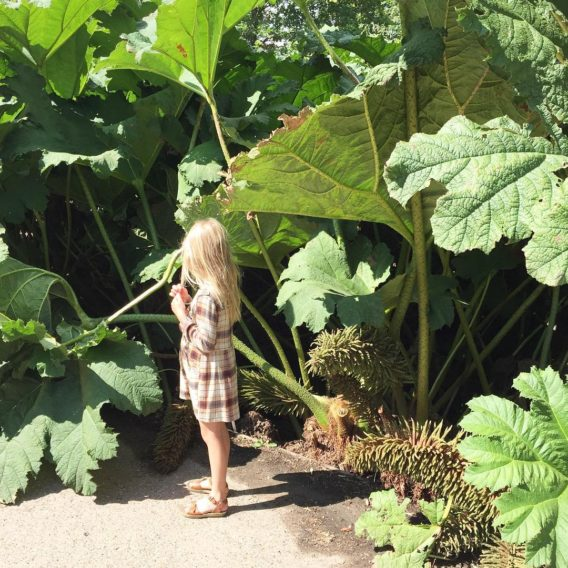 Mini Tabitha dwarfed by these giant leaves wisleygardens summerholidays tabithasylviehellip